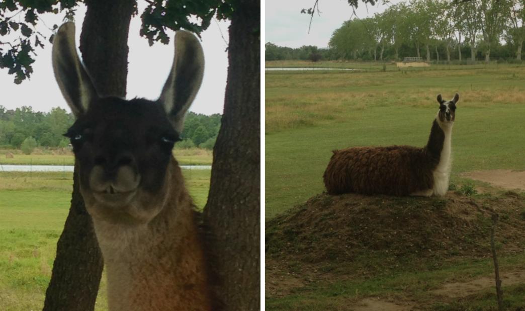 Lamas-MaViedeboheme